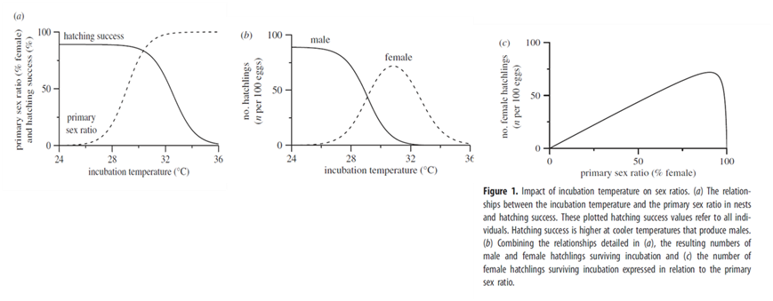 temperature-dependent sex determination is seen in in Oklahoma